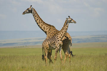 Nairobi Nationalpark-Tour, David Sheldrick Elefantenwaisenhaus...