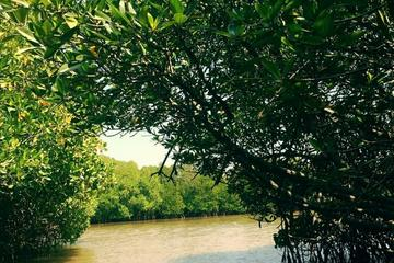 Day Tour to Pichavaram Mangrove Forest and Thillai Nataraja Temple in Chidambaram from Pondicherry