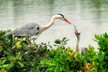 Visit to Vedanthangal Bird Sanctuary from Chennai