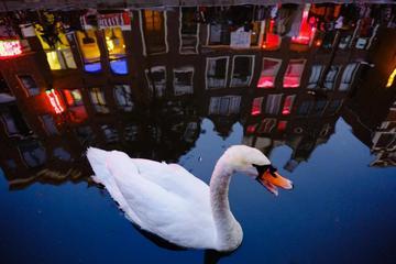 Abendlicher Rundgang im abgelegeneren Amsterdamer Rotlichtviertel mit...