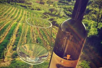 The Dionysus Tour Lunch or dinner and Wine Tasting at Plesivica