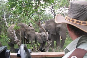 Full-Day Kruger Safari from Skukuza