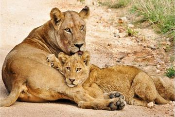 14-Day Discover South Africa Tour...