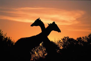 3-Day Kruger Experience Tour from...