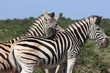 7-Day South Africa Wildlife and...
