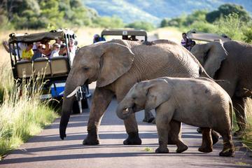 Pilanesberg Game Reserve Full-Day Tour from Johannesburg