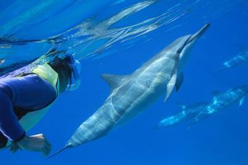 オアフシュノーケルクルーズ:イルカやカメと海で…