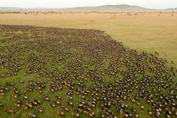 10-Day Great Wildebeest Migration Safari Guided Tour through Tanzania