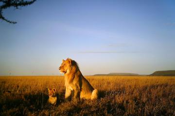 5-Day National Park Safari in Tanzania