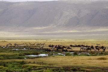 Full-Day Ngorongoro Crater Tour from Arusha