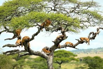 Full-Day Safari in Lake Manyara