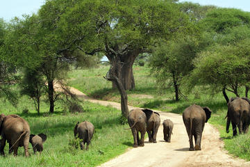Full-Day Safari in Tarangire National Park