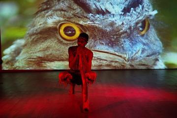 Waradah Aboriginal Center Cultural Performance
