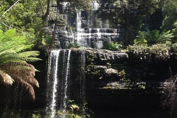 Private Mt Field National Park Day Trip from Hobart Including Salmon Ponds and Bonorong Wildlife Sanctuary