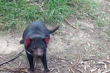 Private South East Food and Scenic Day Trip from Hobart Including the Tasmanian Devil Unzoo