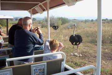 Excursão de trator pela Safari Ostrich Farm em Oudtshoorn