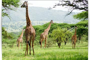 5 Days 4 Nights Budget Camping Safaris to Lake Manyara, Ngorongoro...