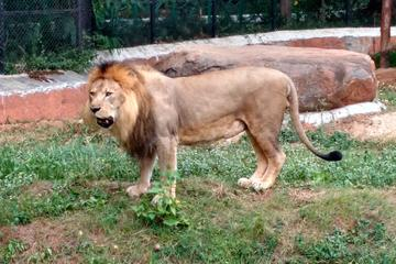 Wild life trail in Chennai