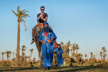 Half-Day Camel Ride in the Rock Desert And Palm Grove from Marrakech