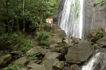 El Yunque Rainforest and Luquillo Beach Small-Group Tour