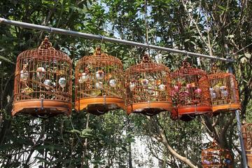 6-stündige private Führung durch Peking: Blumen- und Fischmarkt...