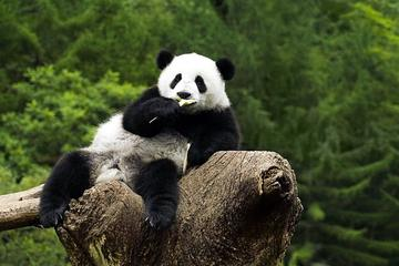 Beijing Zoo Panda House and Summer Palace Private Tour