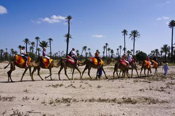 Passeggiata in cammello al tramonto nel palmeto di Marrakech