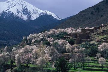 Privat dagstur: Atlasbjergene, Ourika-dalen, berberlandsby, vandfald...