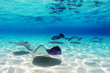 Punta Cana Shark and Stingray Encounter by Glass Bottom Boat