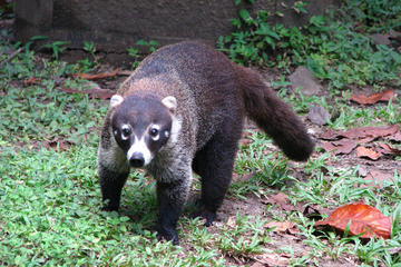 Excursión al Parque Natural Metropolitano en la ciudad de Panamá