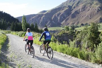 Half-Day Self-Guided Bike Tour of the Wineries