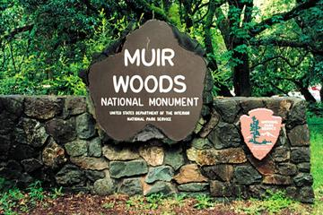 Private Tour of Muir Woods...