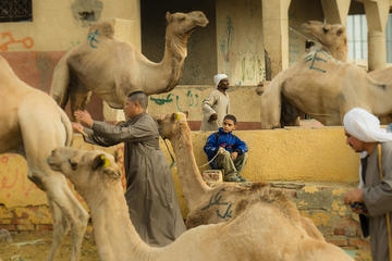Private tour to camel market