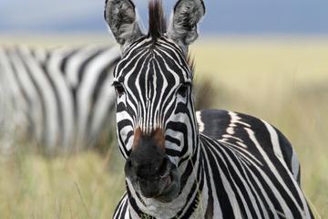 4-Day Safari from Arusha: Tarangire, Serengeti and Ngorongoro