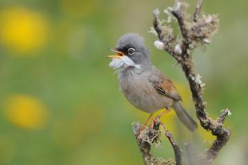 Excursión guiada de medio día para observar aves desde Lanzarote