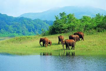 Kerala Hills, Backwaters & Wildlife 5 days (Private)