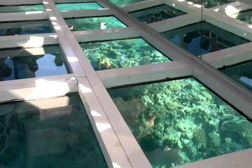 Glass Bottom Boat Tour from Sharm El...