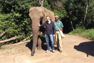 Close Encounter with African Elephants including 'Trunk in Hand' Walk...
