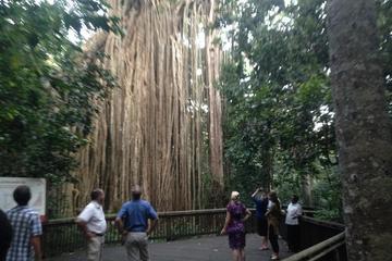 Heldagstur till regnskogen och vattenfall från Cairns med ...