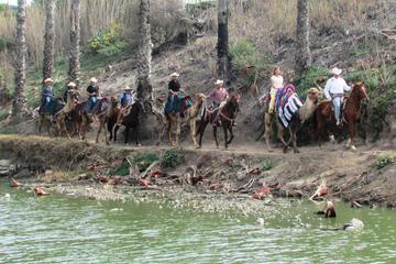 Paseo en camello en Rosarito