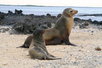 5-Day Galapagos Land Tour: Magic of Isabela