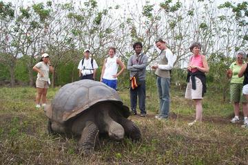 7-Day Tour of Galapagos and Quito Including Hotel and Transfers