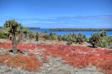 North Seymour Day Trip Galapagos - Includes Hotel Pick-up