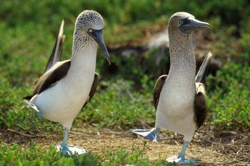 8-Day Tour of Quito and Galapagos Islands