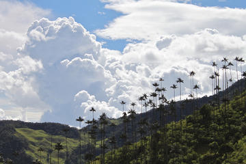 Private Tour: Cocora Valley and Ocaso...