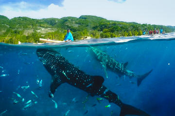 Canyoneering with Whaleshark Encounter