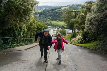 Half-Day Iconic Dunedin City Tour