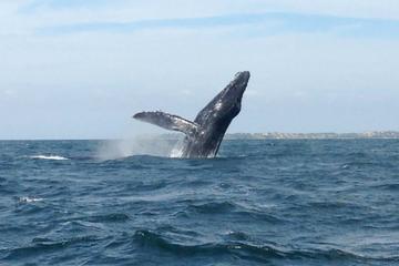 Whale Watching Snorkeling Trip at Marietas Islands