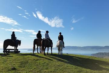 Horse Trekking from Rotorua