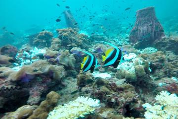 Coral Island Escapade - ex-Langkawi